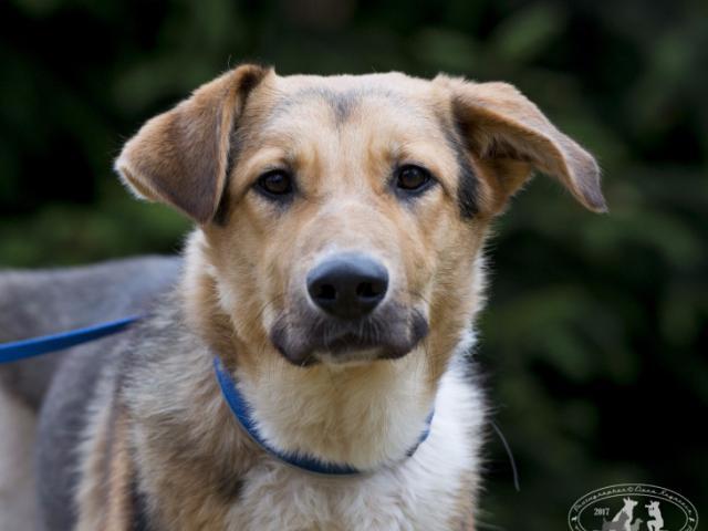 Отдам в дар: Невероятный пес Бэн ищет дом  фото2