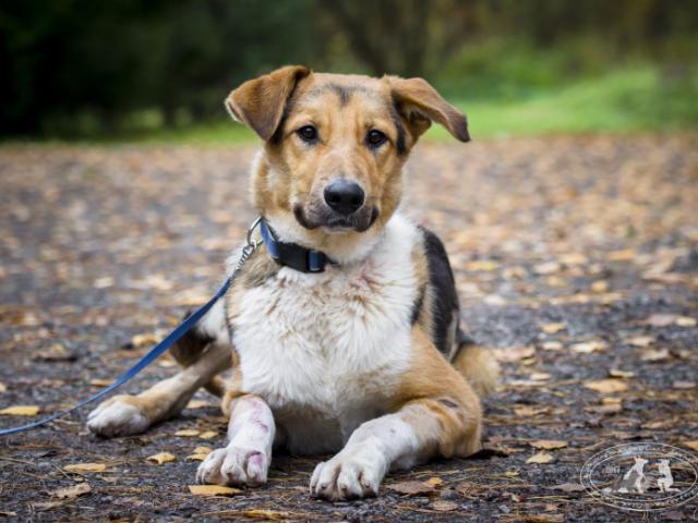 Отдам в дар: Невероятный пес Бэн ищет дом