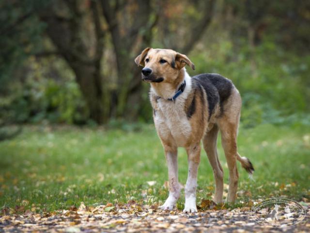 Отдам в дар: Невероятный пес Бэн ищет дом  фото3