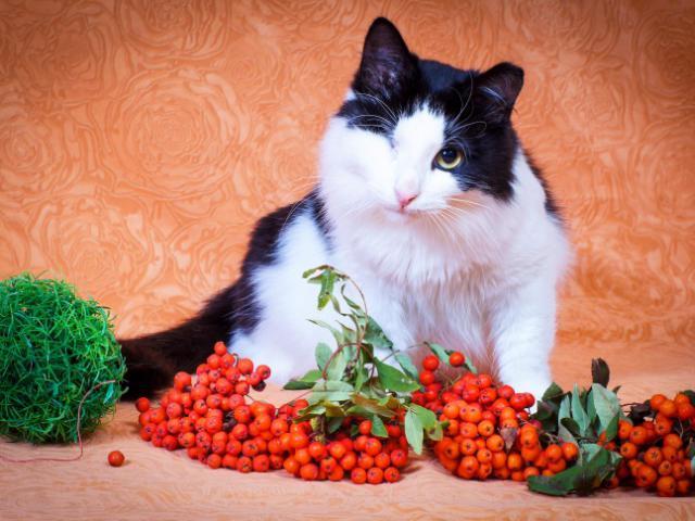 Отдам в дар: Особенный котик Маркиз ищет любящую семью