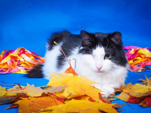 Отдам в дар: Особенный котик Маркиз ищет любящую семью фото2