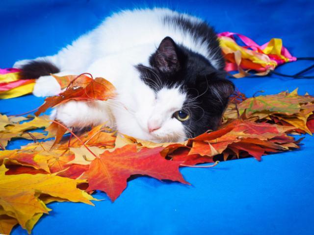 Отдам в дар: Особенный котик Маркиз ищет любящую семью фото3
