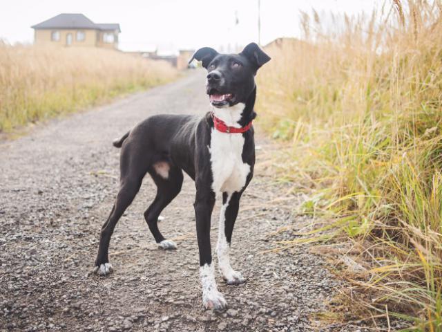 Отдам в дар: Чудесная собака в добрые руки