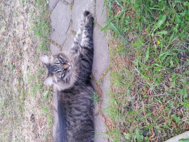 Отдам в дар: Пропала кошка