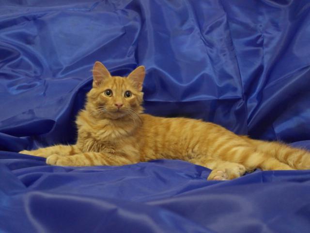 Отдам в дар: Общительный и активный котенок Пусик в поисках сем фото3
