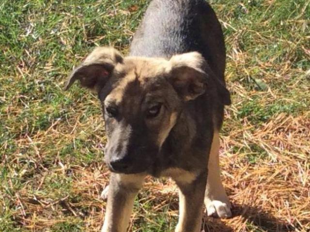 Отдам в дар: Веселый щенок Носочек в добрые руки фото3