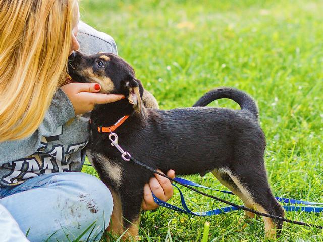 Отдам в дар: Ищет дом отважный щенок Робин  фото3