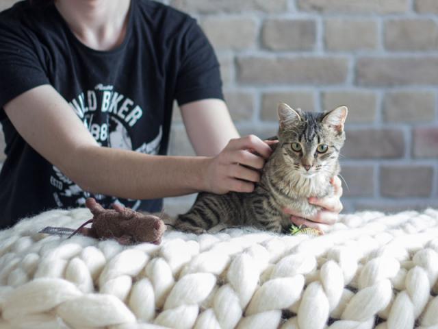 Отдам в дар: Котенок-девочка в добрые руки фото2