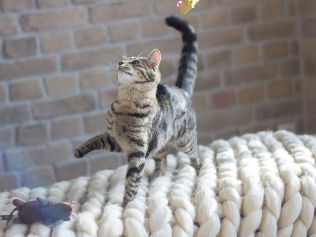 Отдам в дар: Котенок-девочка в добрые руки