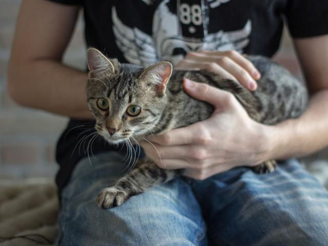 Отдам в дар: Котенок-девочка в добрые руки фото3