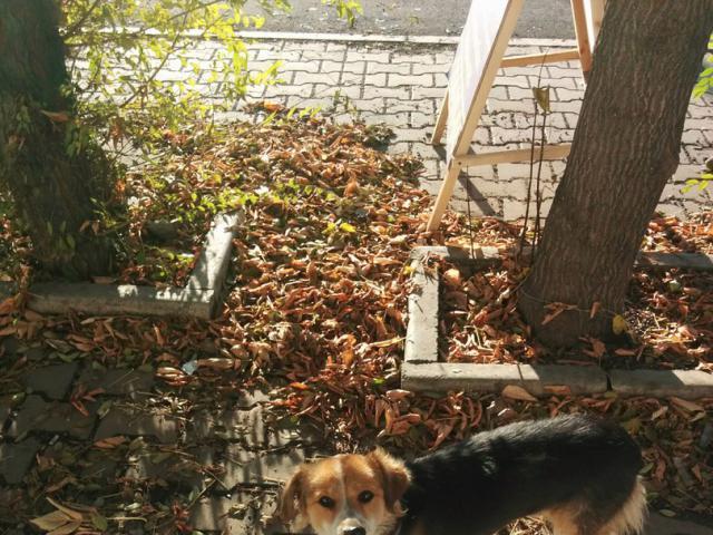 Потерялся/Нашелся: Найдена собака