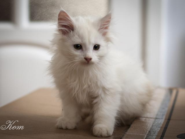 Отдам в дар: Котята