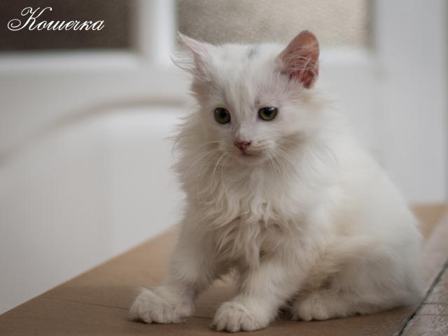 Отдам в дар: Котята фото2