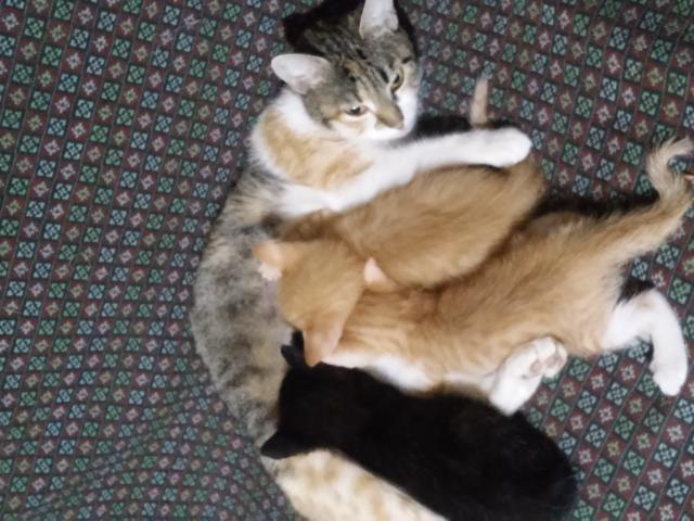 Отдам в дар: отдам котят фото2