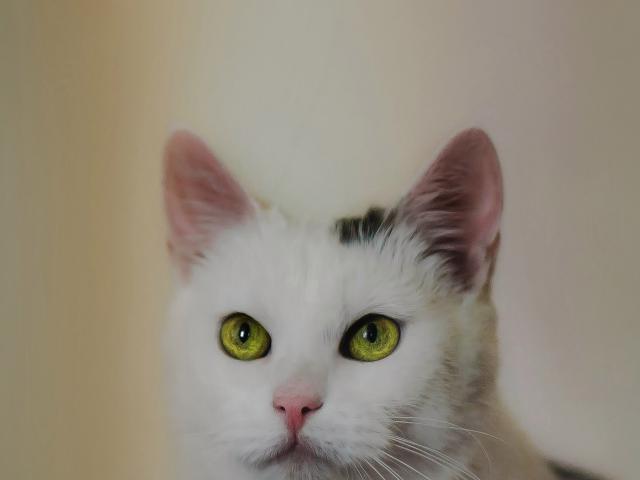 Отдам в дар: Чудо кошка в добрые руки