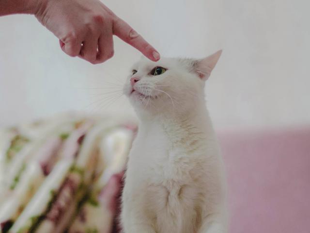 Отдам в дар: Чудо кошка в добрые руки фото2