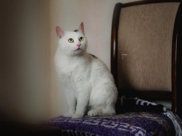 Отдам в дар: Чудо кошка в добрые руки фото3