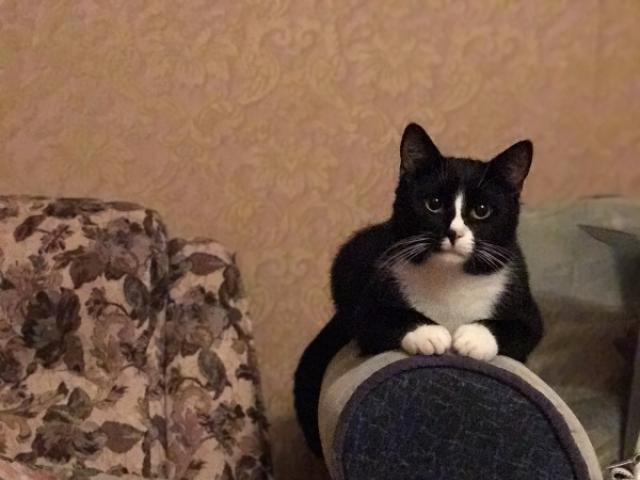 Отдам в дар: Кот Цезарь ждёт родителей фото3