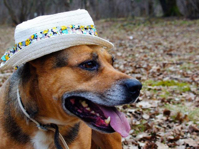 Отдам в дар: Муха- самая обаятельная собака ищет дом фото3