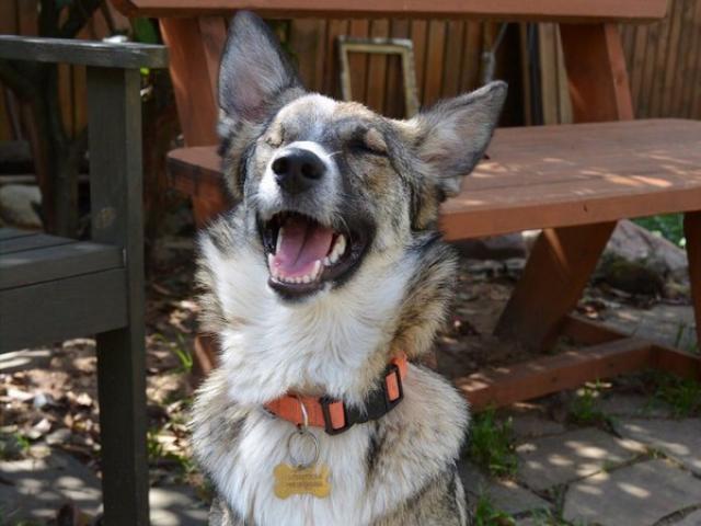 Отдам в дар: Москва и МО Особенная собачка ищет дом…  фото2