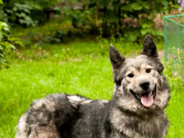 Отдам в дар: Красивая собака Луна в добрые руки