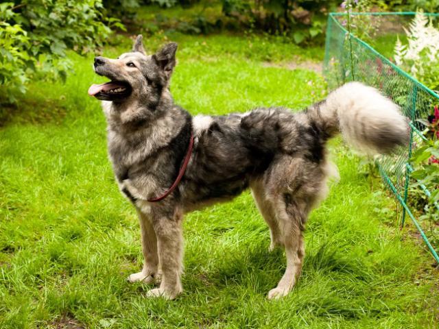 Отдам в дар: Красивая собака Луна в добрые руки фото2