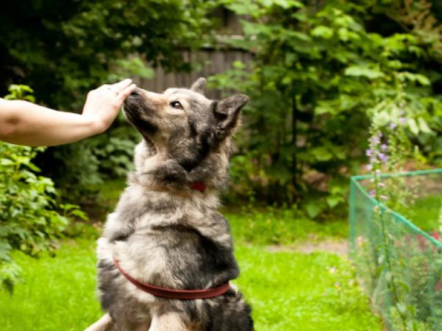 Отдам в дар: Красивая собака Луна в добрые руки фото3