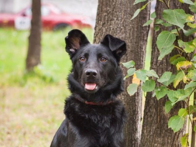 Отдам в дар: Красивый пес Кекс в добрые руки фото3