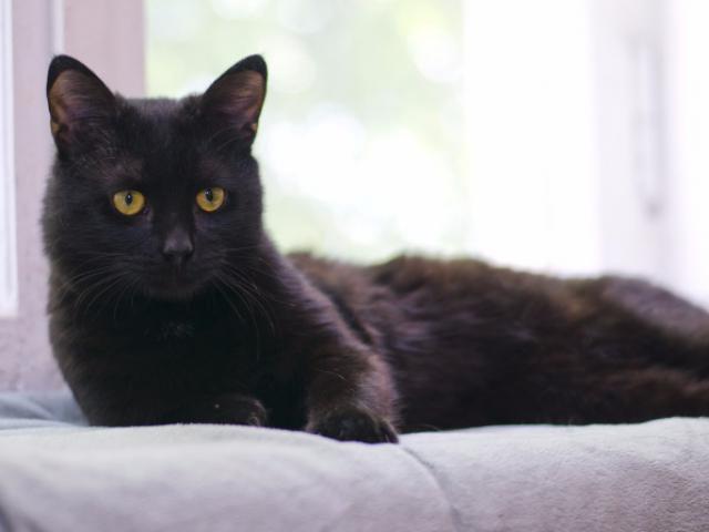 Отдам в дар: Ищет дом милый котик Котя фото3