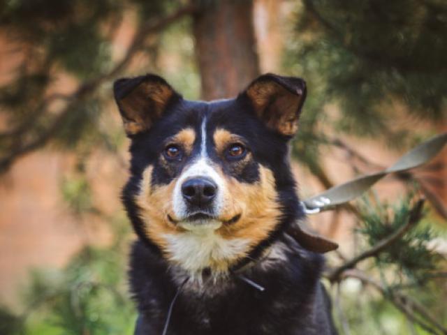 Отдам в дар: Красивый пес в добрые руки