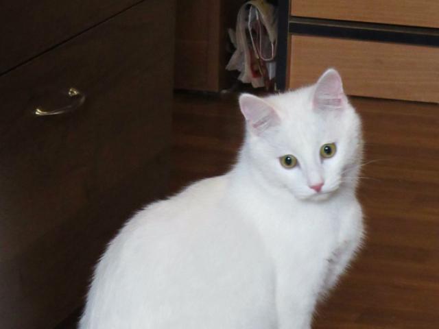 Отдам в дар: Обаятельный котик Тотошка ищет любящих маму и папу