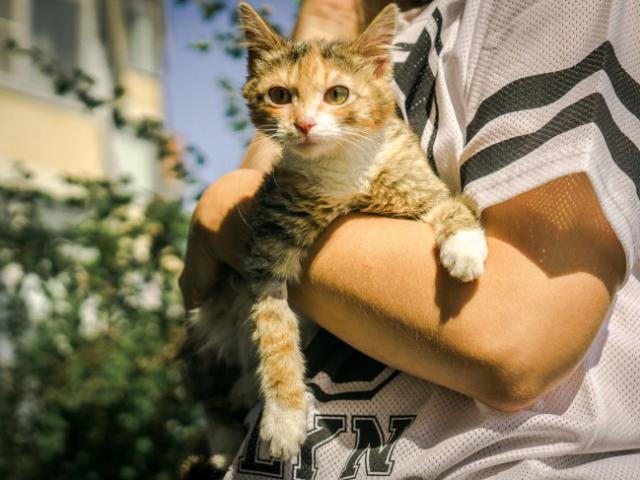 Отдам в дар: Молодая кошечка Дольче ищет дом