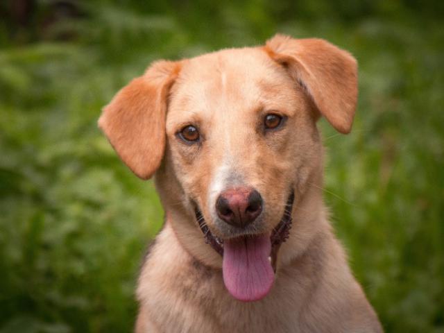 Отдам в дар: Необыкновенно милая собака Кэри в добрые руки