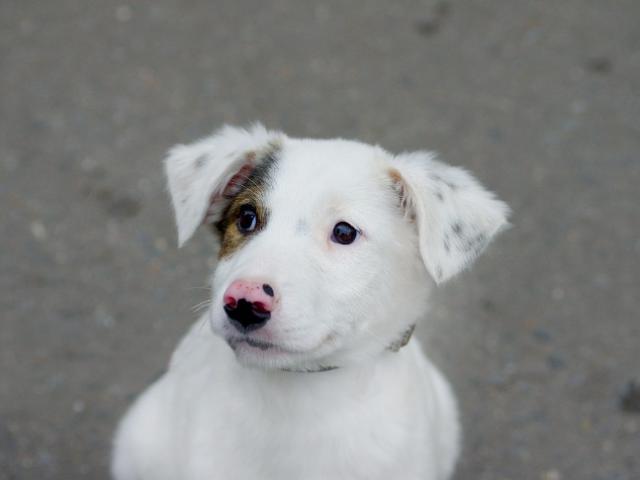 Отдам в дар: Красивый щенок Бим в добрые руки фото2