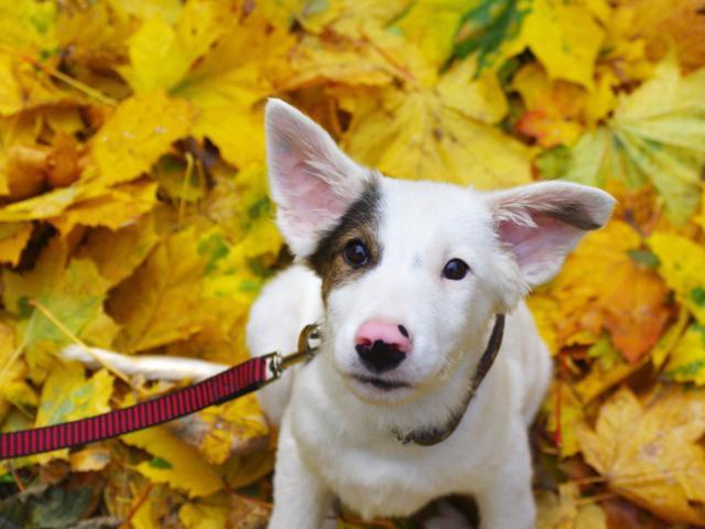 Отдам в дар: Красивый щенок Бим в добрые руки