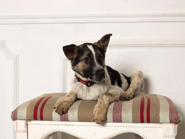 Отдам в дар: Красивый щенок Дунай в хорошие руки