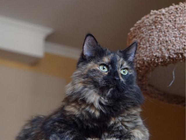 Отдам в дар: Москва и МО Кошка и кот в поиске домов  фото2