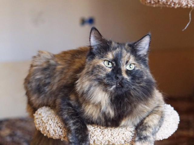 Отдам в дар: Москва и МО Кошка и кот в поиске домов  фото3