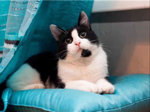 Отдам в дар: Чудесный кот Марсель ищет любящих хозяев