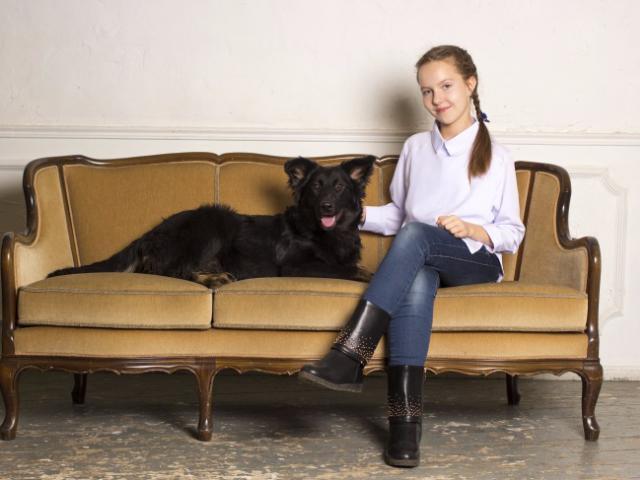 Отдам в дар: Молодая активная собака Честа в хорошие руки фото3