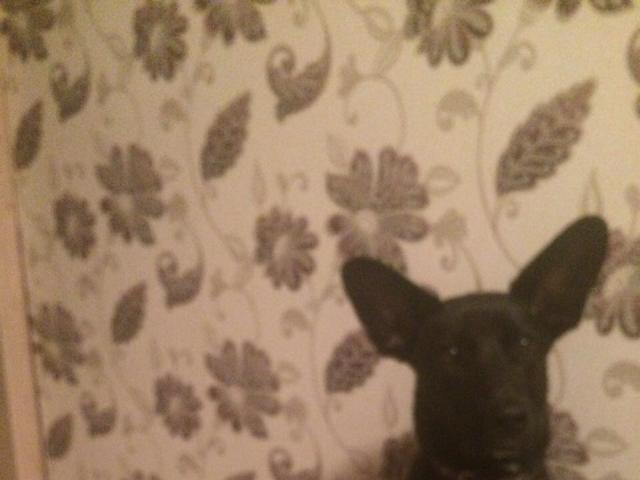 Отдам в дар: отдам собаку фото3