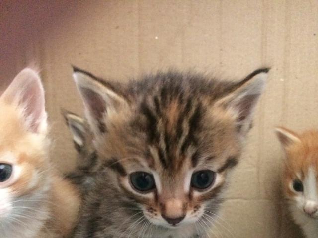 Отдам в дар: Очаровательные котята фото2