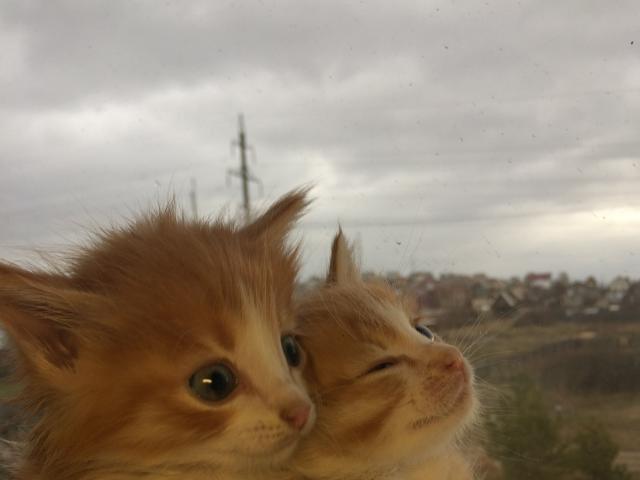 Отдам в дар: Очаровательные котята фото3