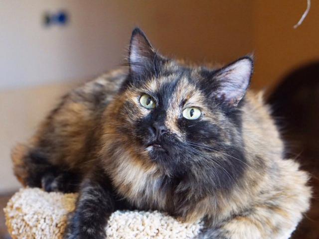 Отдам в дар: Москва и МО Кошки и кот в поиске домов