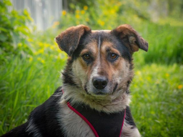 Отдам в дар: Добрый пес Рони в добрые руки фото2