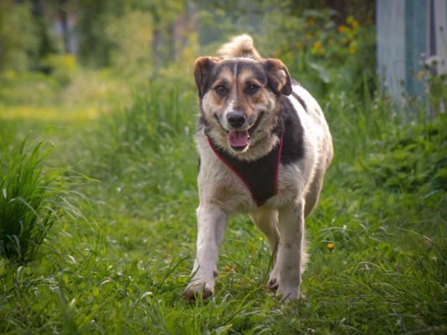 Отдам в дар: Добрый пес Рони в добрые руки фото3
