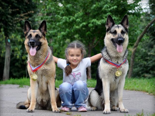 Продаю: щенки восточно европейской овчарки от Победителей фото3