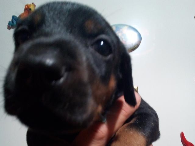 Продаю: класные щеночки