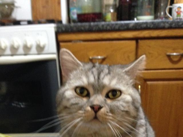 Потерялся/Нашелся: Потерялся кот член семьи фото2