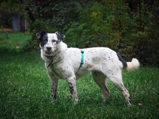 Отдам в дар: В добрые ответственные руки отдаётся собака Джесс